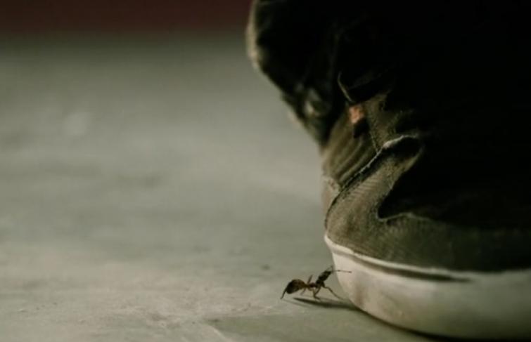 Les déboires d'une fourmi dans un skatepark